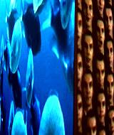 metaforms2.jpg: 160x190, 61k (October 12, 2009, at 06:25 PM)